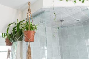 Pflanzen im Bad werden gerne an die Decke gehängt.