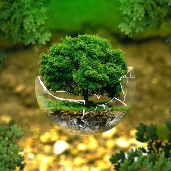 Baum in einer zerbrochenen Glaskugel: Nachhaltigkeit im Bad trägt zum Umweltschutz bei.im bad